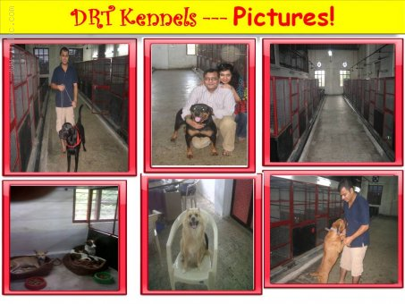 Dogs Boarding and Services in Mumbai- DRT KENNELS